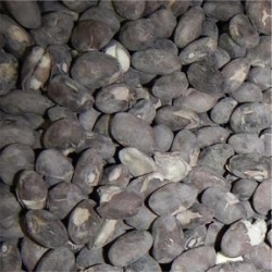 Black Beans Freeze Dried